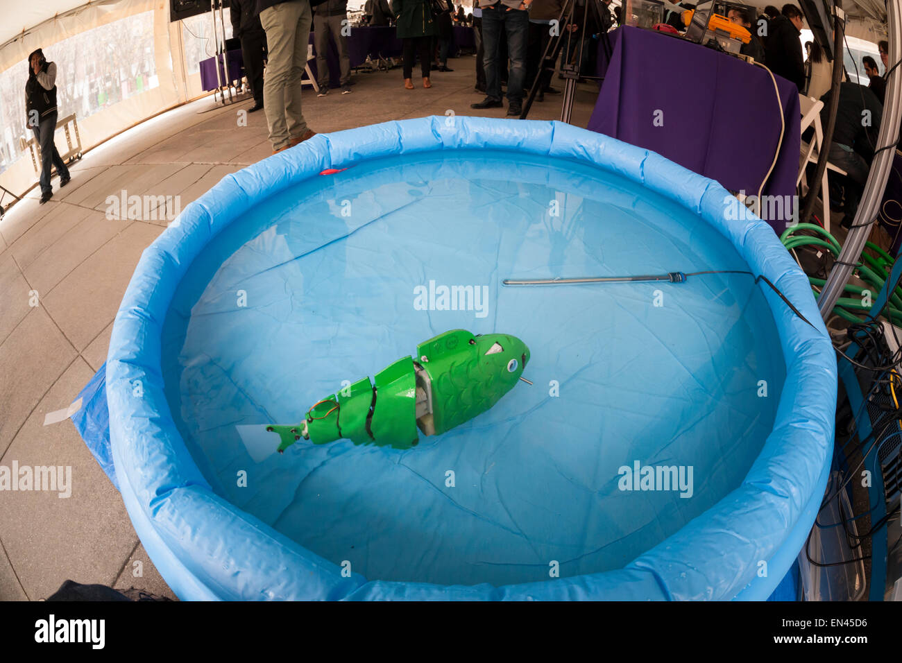 Ph.D candidate Paul Phamduy's robotic fish, built in collaboration with other students, happy floats in a pool - Stock Image