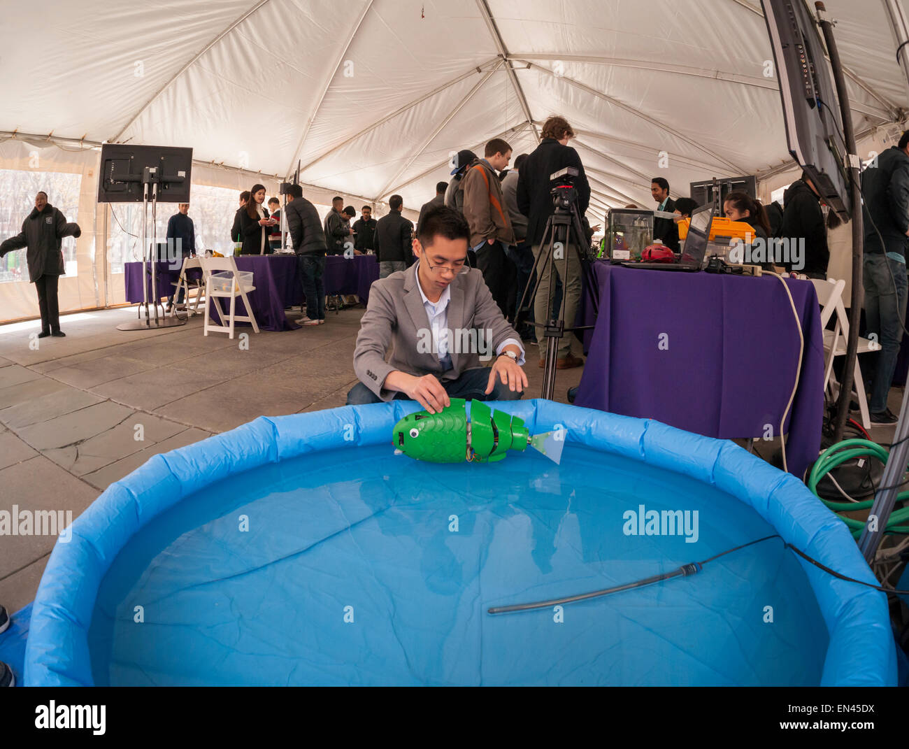 Ph.D candidate Paul Phamduy's adjusts his robotic fish, built in collaboration with other students, in a pool - Stock Image