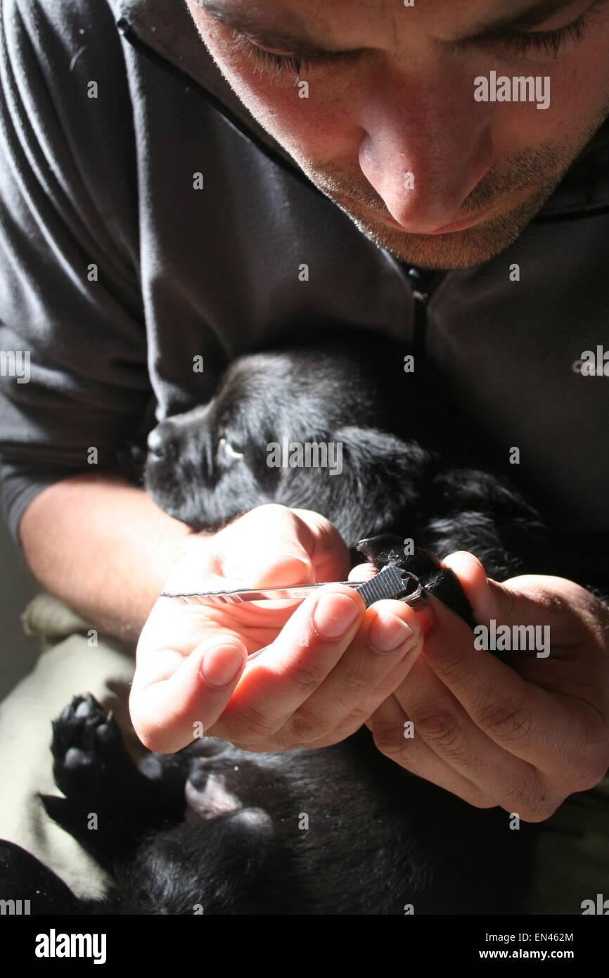 Dog Nail Clipping Stock Photos & Dog Nail Clipping Stock Images - Alamy