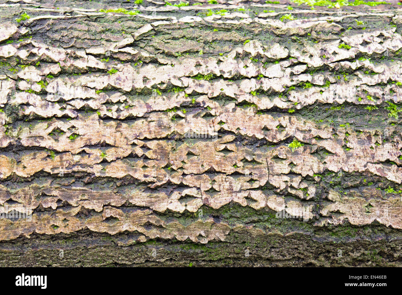Detailed image of part of an old tree trunk with bark and moss Stock Photo