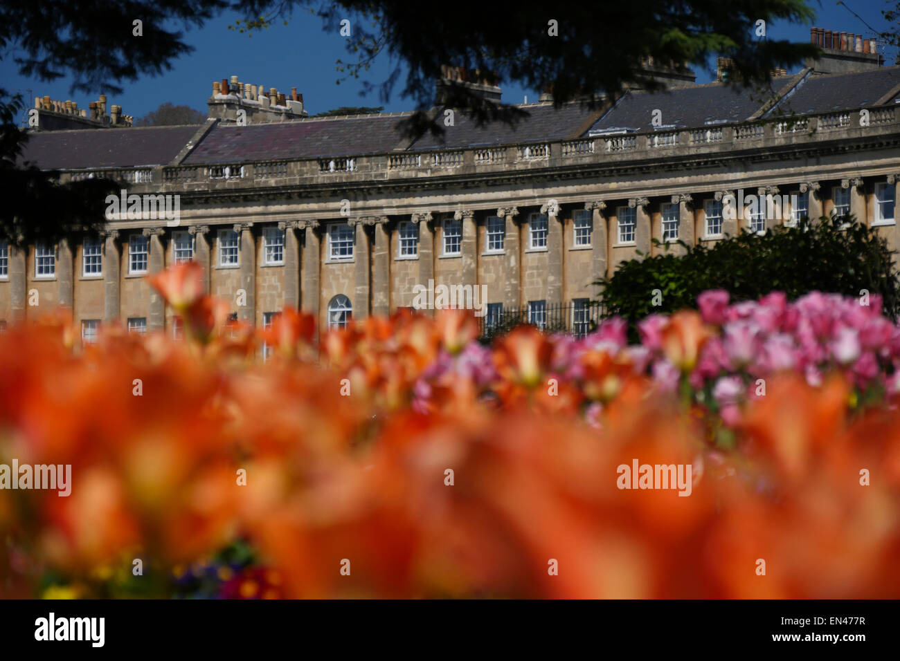 Royal Crescent, Bath, England, with spring flowers in foreground Stock Photo