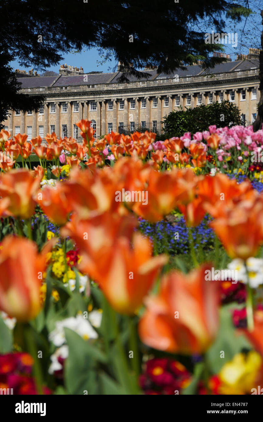 Royal Crescent, Bath, UK, with beautiful tulips in foreground Stock Photo