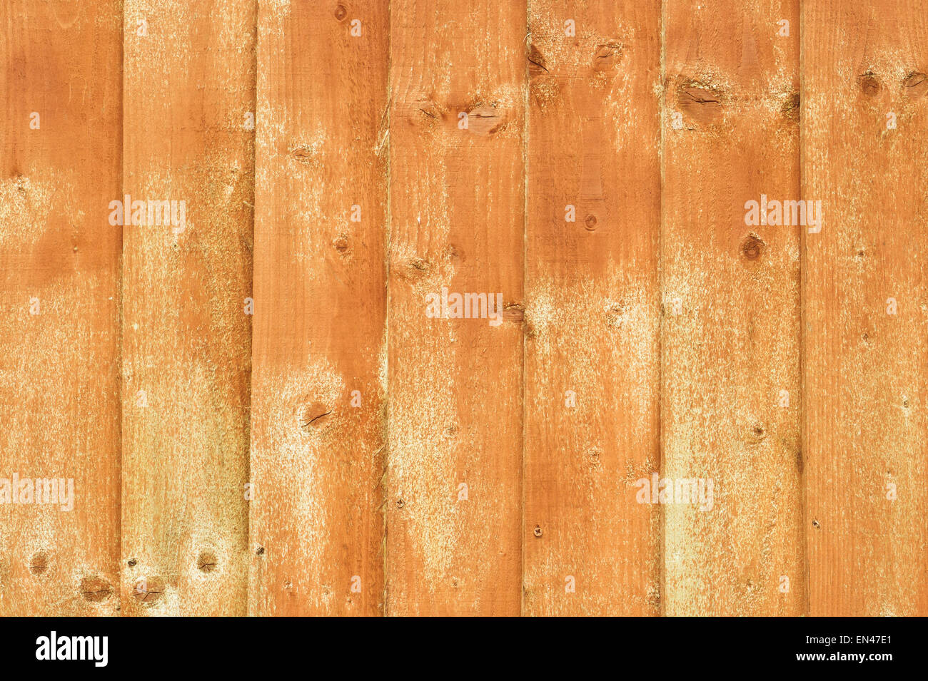 Wooden fence panels recently treated with wood preservative Stock Photo
