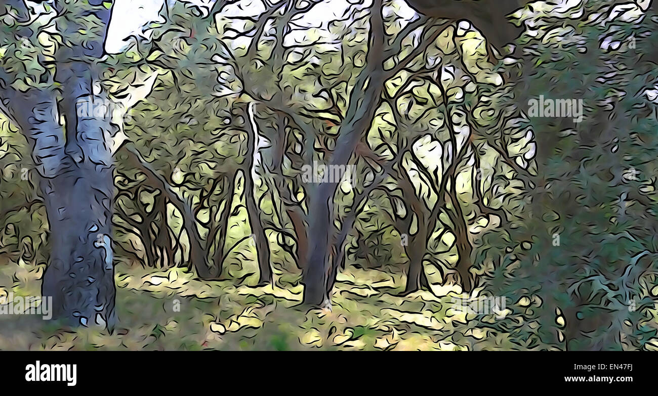 An abstract photo of an oak woodland. - Stock Image