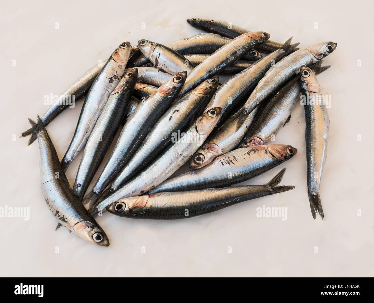 In the picture a set of fresh anchovies of the Mediterranean resting on a white sheet of paper - Stock Image