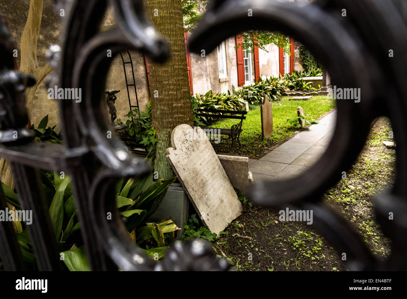 A tombstone rests on a palm tree in the garden of the French Huguenot Church along Queen Street in historic Charleston, - Stock Image