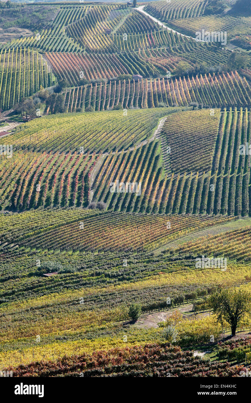 italian beverage: piemont is the land of red wine like barolo and nebiolo - Stock Image