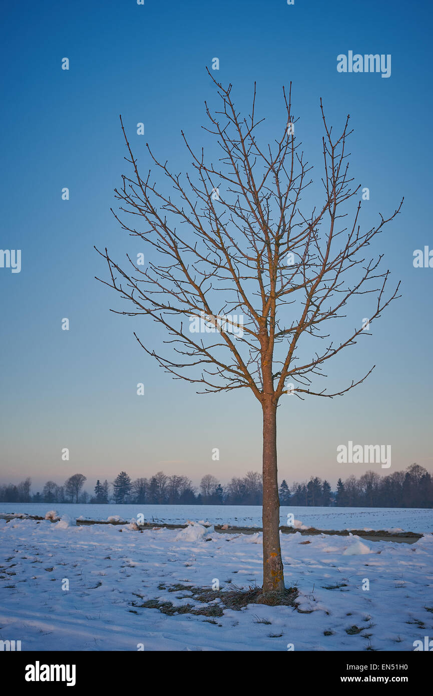 solitary barren Tree in in snow in the cold winter months - Stock Image
