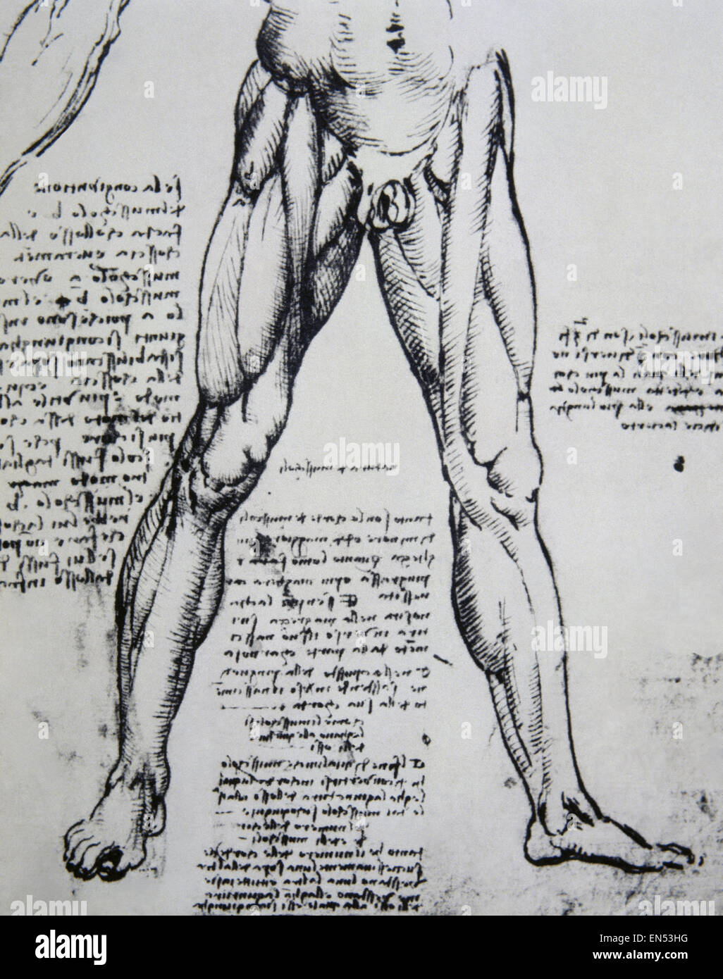 Leonardo da Vinci (1452-1519). Italian polymanth. Genius Stock Photo ...