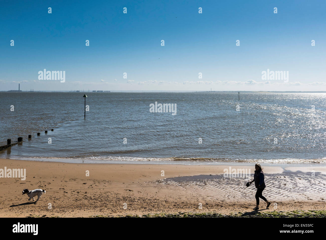 A dog walker on a beach in Southend, Essex. Stock Photo