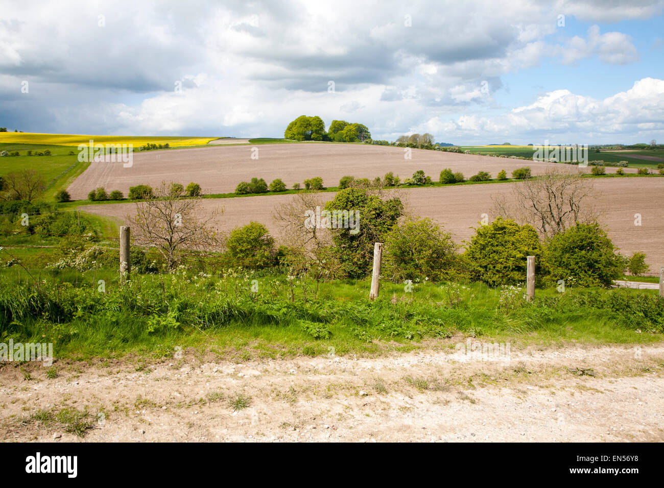Unmade track crossing chalk landscape toward the village of East Kennet, Wiltshire, England - Stock Image