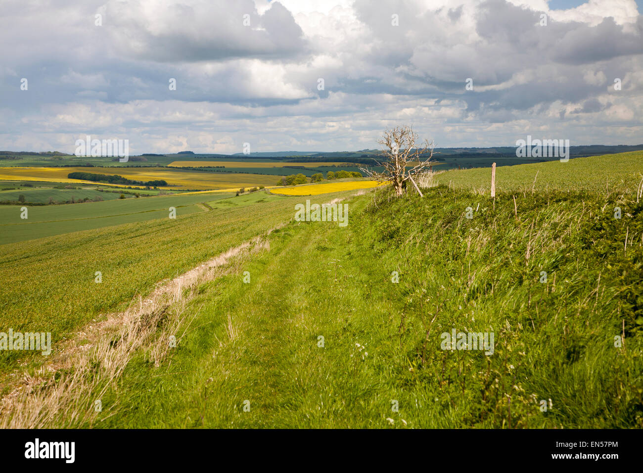 Pathway over chalk downland landscape upland scenery All Cannings Down, near East Kennet, Wiltshire, England cumulus - Stock Image