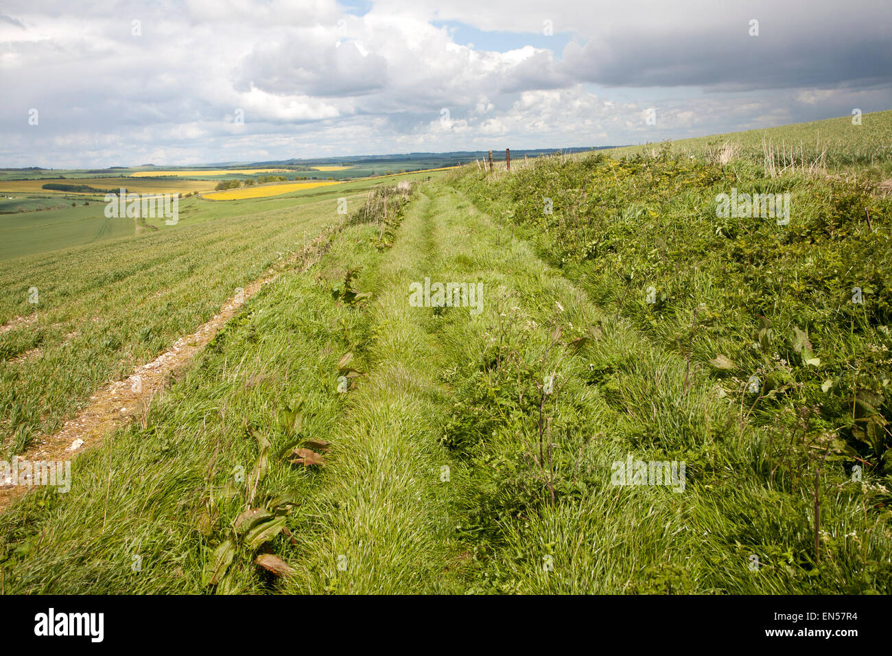Grass track crossing chalk landscape of the Marlborough Downs, near East Kennet, Wiltshire, England, UK - Stock Image
