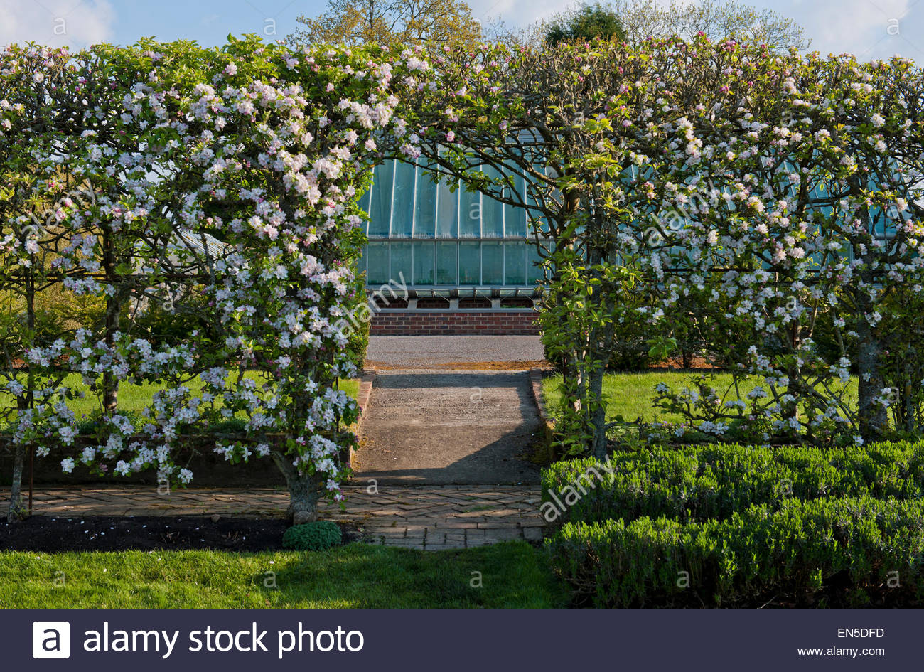Malus domestica Apple tunnel - Stock Image