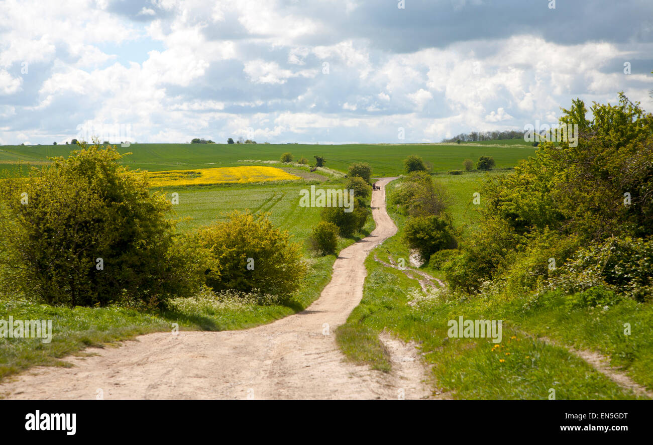 Path crossing chalk downland on Roundway Down, Devizes, Wiltshire, England - Stock Image