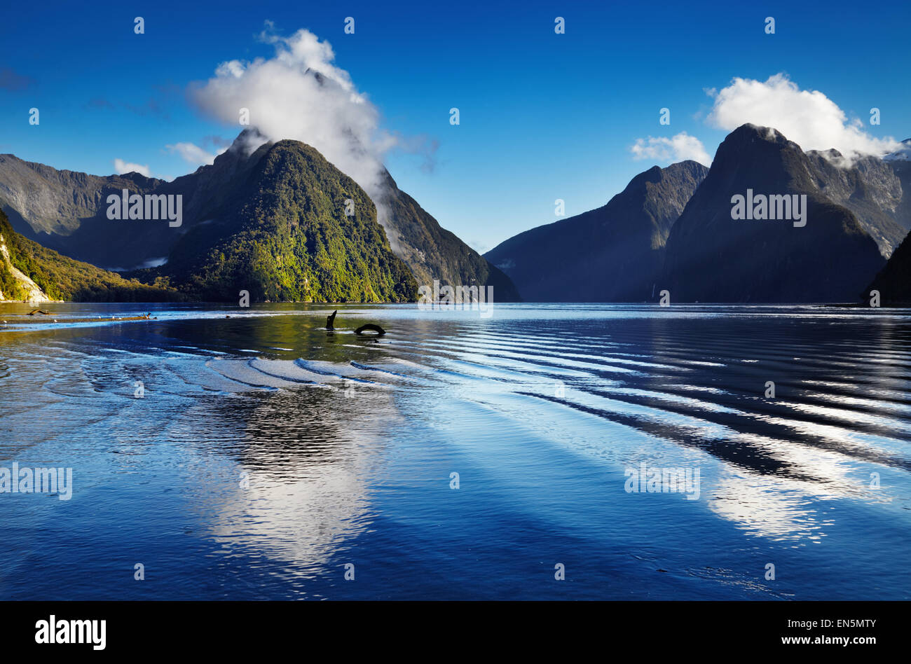 Fiord Milford Sound, South Island, New Zealand - Stock Image
