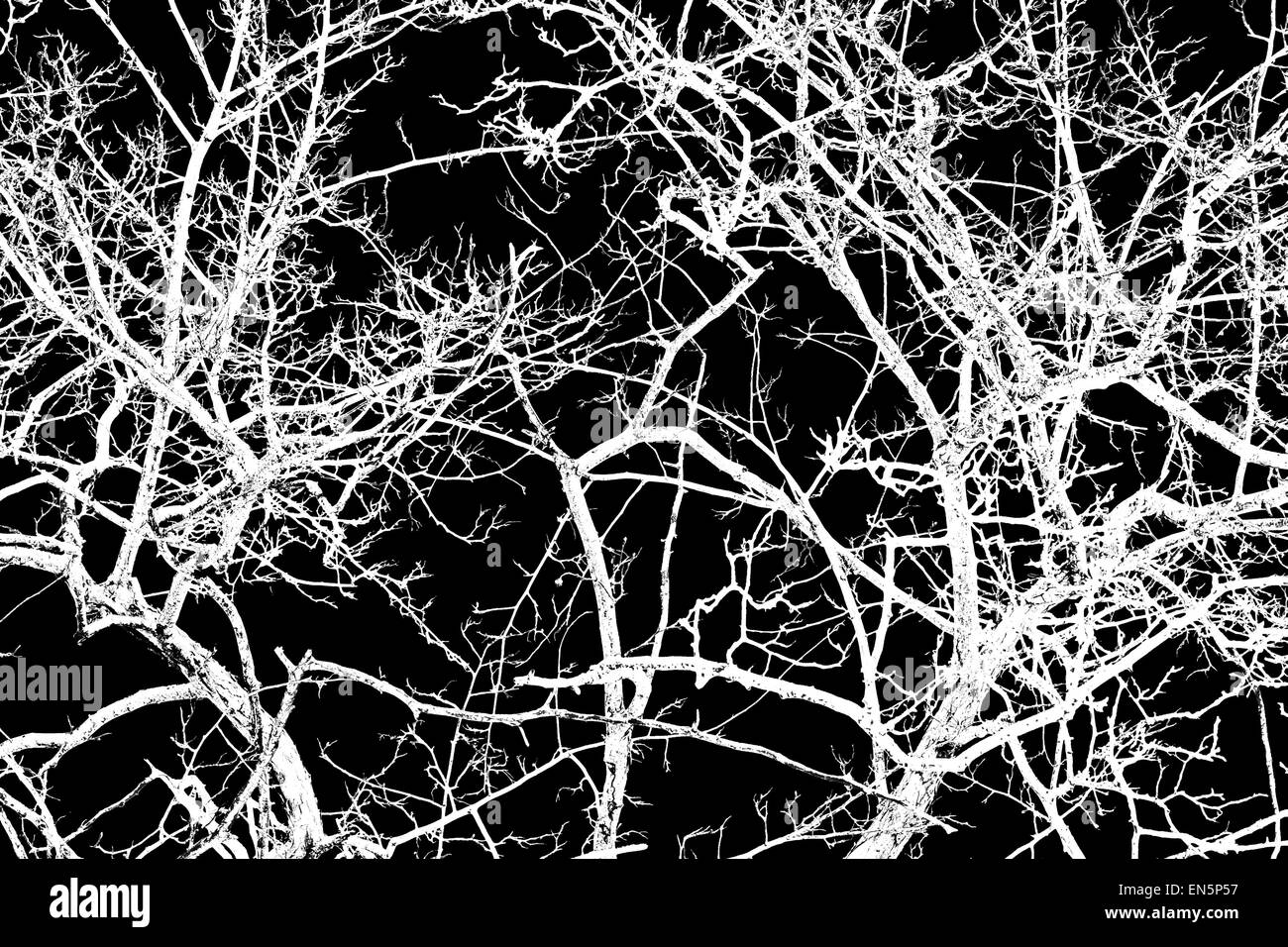 Tree branches and twigs of white and gray color isolated against black background. - Stock Image