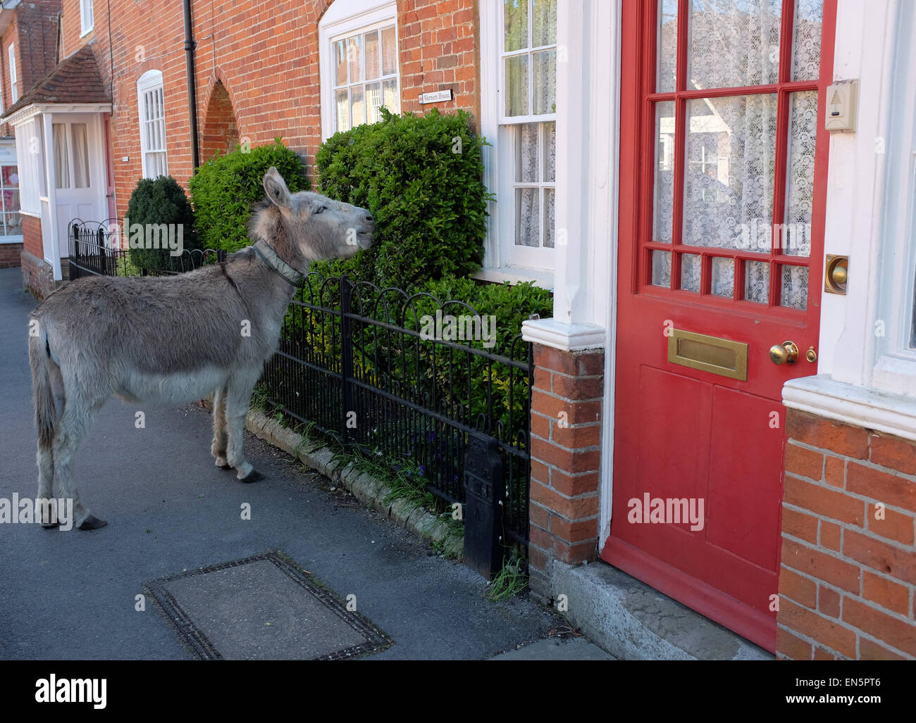 New Forest Donkey Stock Photos New Forest Donkey Stock Images Alamy