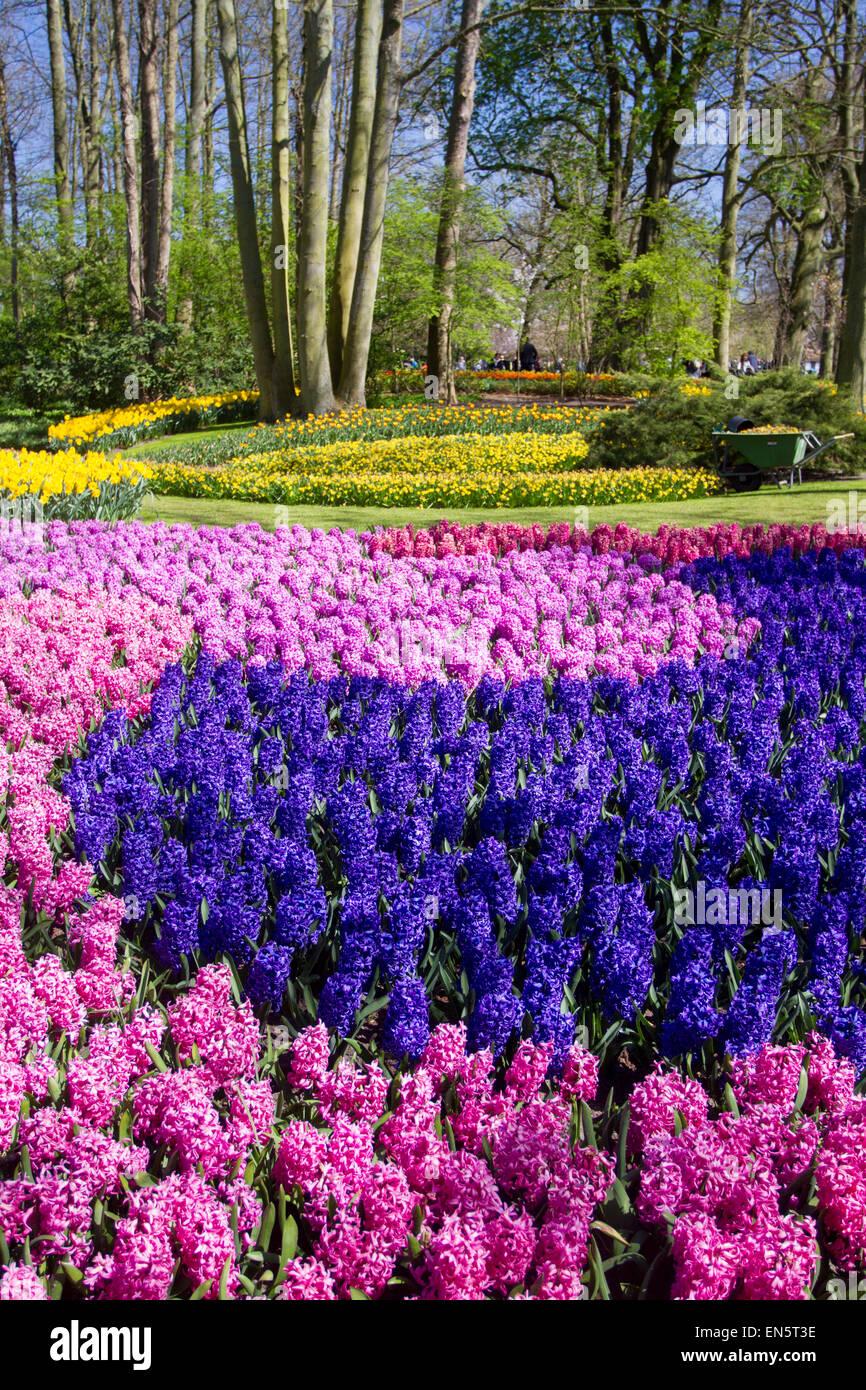 Keukenhof gardens, Lisse, Holland - Stock Image