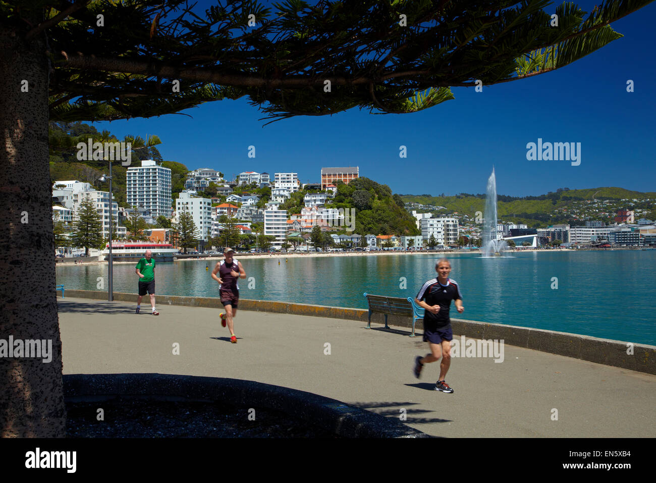 Runners at Oriental Bay, Wellington, North Island, New Zealand - Stock Image