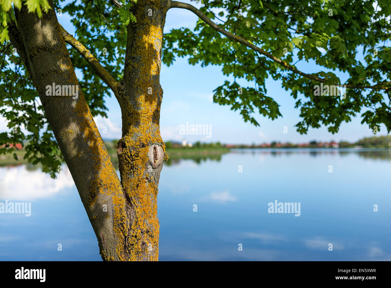 Spring water waterfront Lake River Tree green bloomed blooming reed graze pastures green space for text layout, - Stock Image