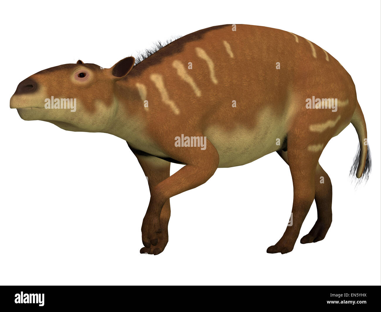 Eurohippus is the herbivorous forerunner of the horse that lived in the Eocene Period in tropical jungles of Europe. - Stock Image