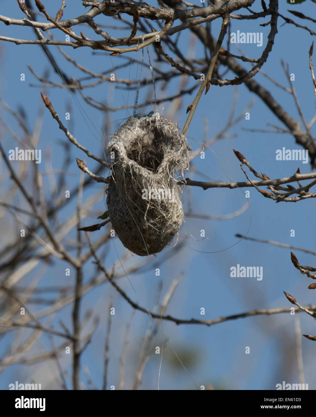 Hanging Bird Nest