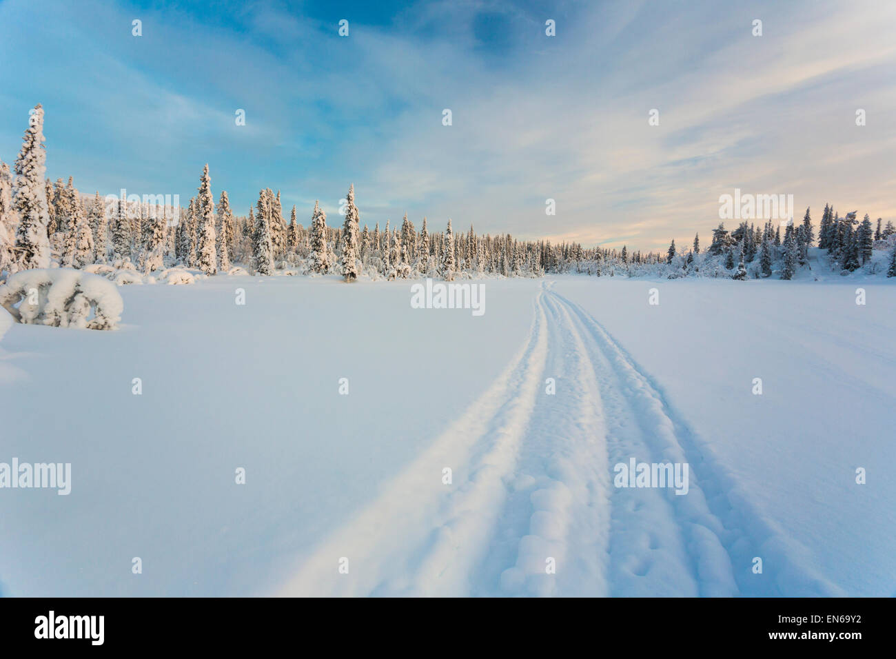 Beautifully winter landscape with plenty of snow and snow on the trees, and a snowmobile track, Gällivare Sweden - Stock Image