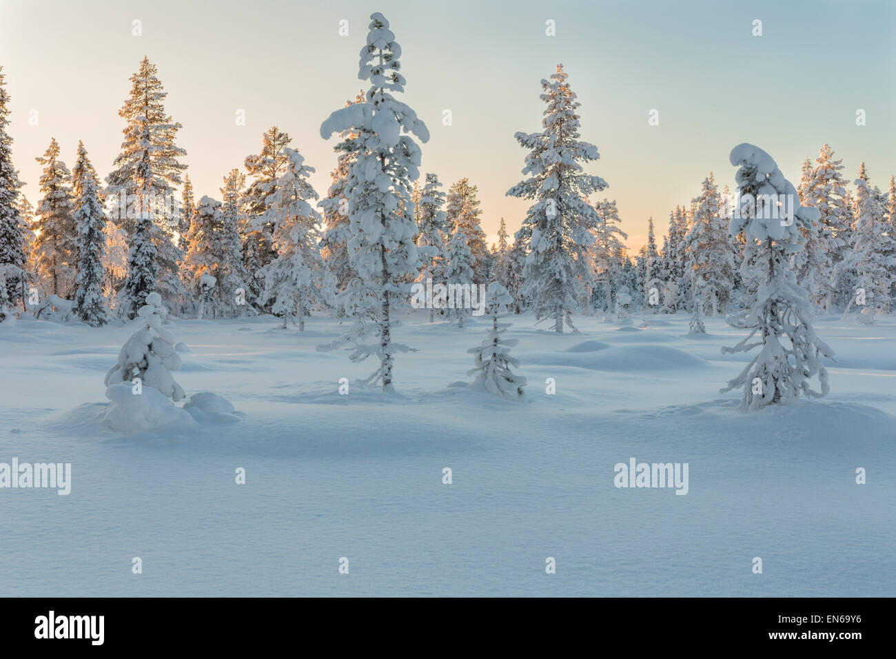 Beautifully winter landscape with plenty of snow and snow on the trees, Gällivare Sweden - Stock Image