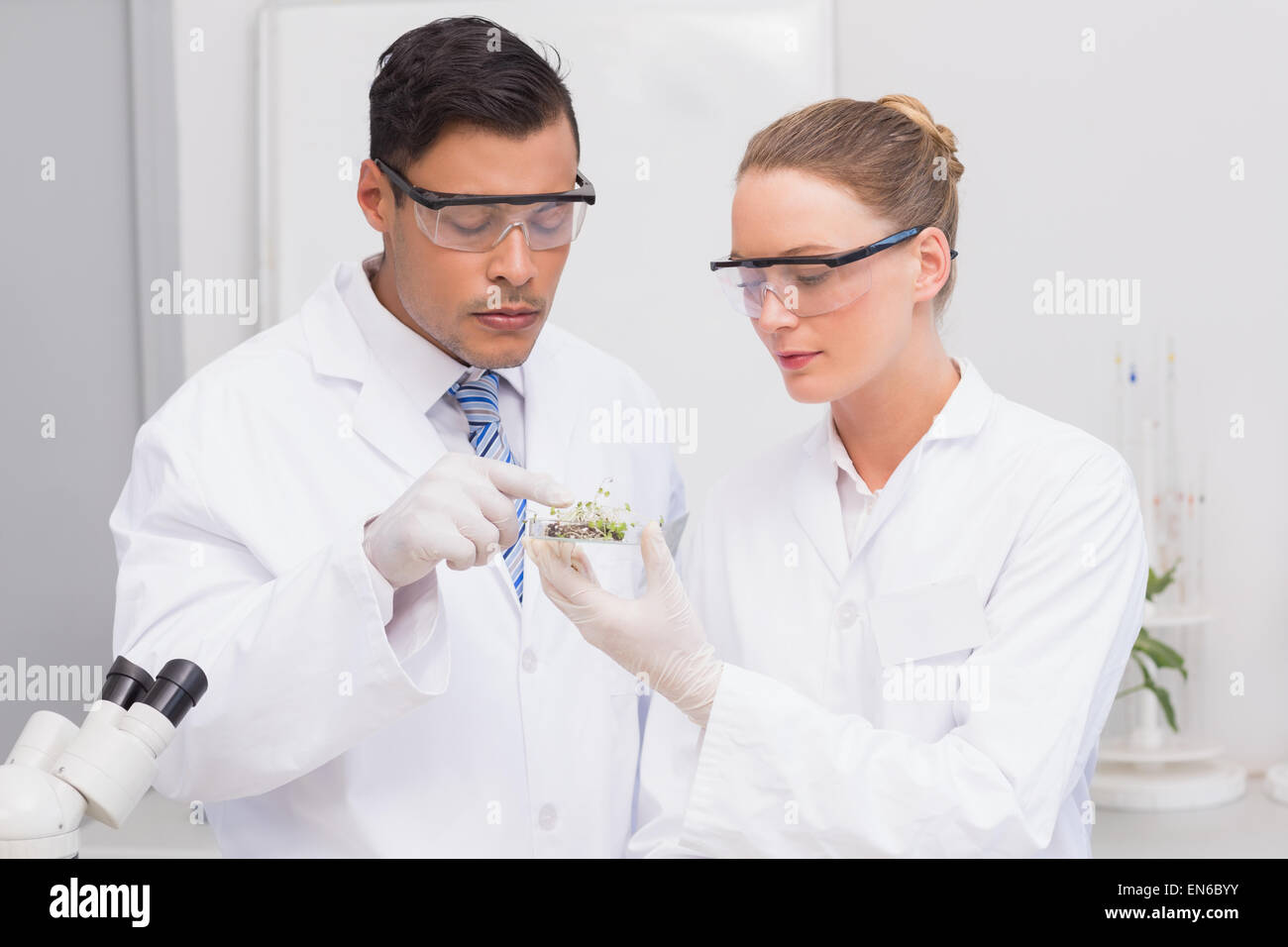 Scientists holding a petri dish with tests of plants Stock Photo