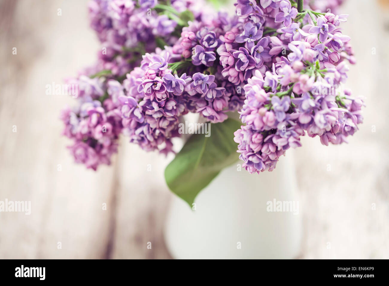 Lilac in white vase - Stock Image