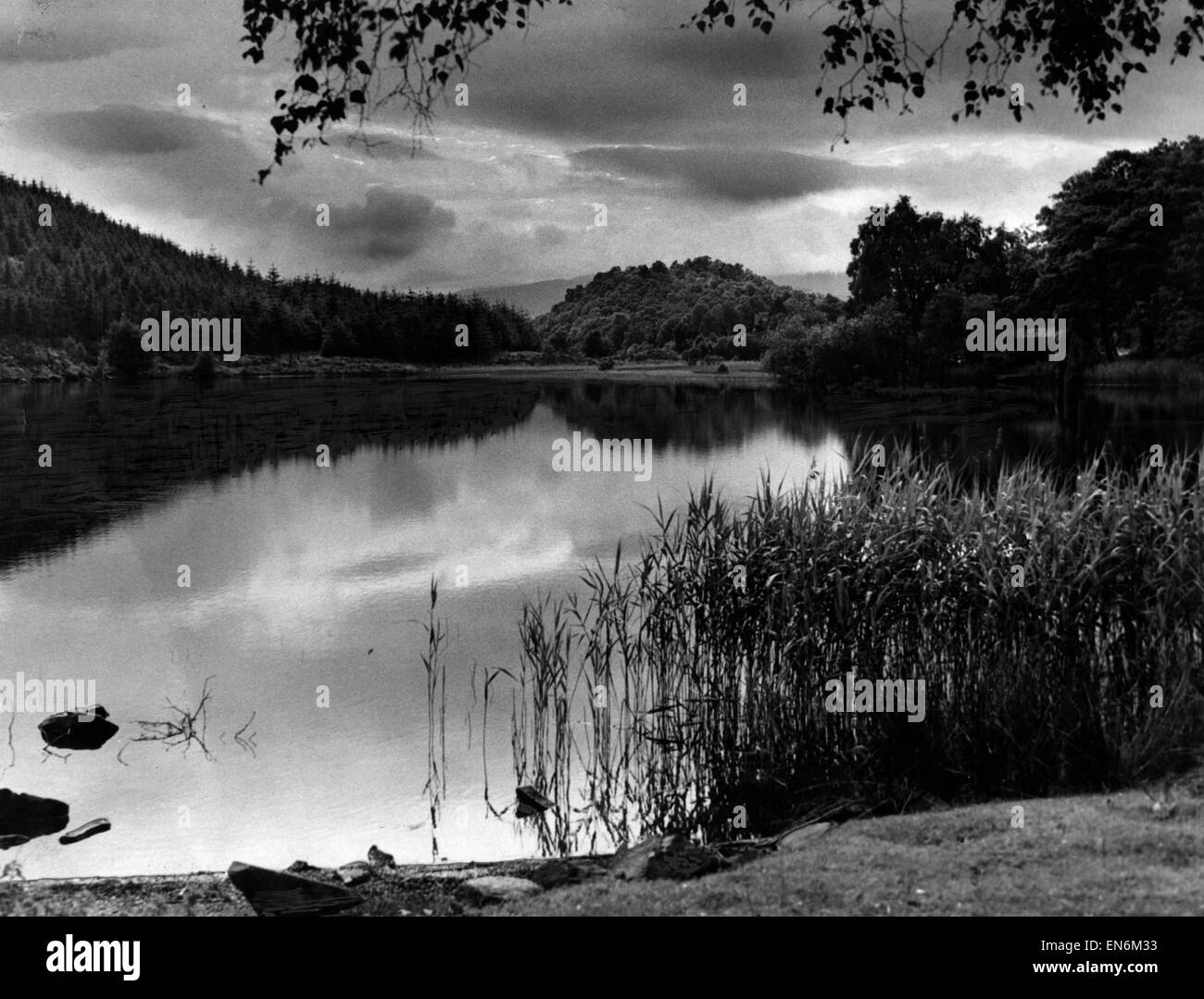 Loch Ard, a body of fresh water in the Loch Lomond and the Trossachs National Park, Stirling District, Scotland, - Stock Image