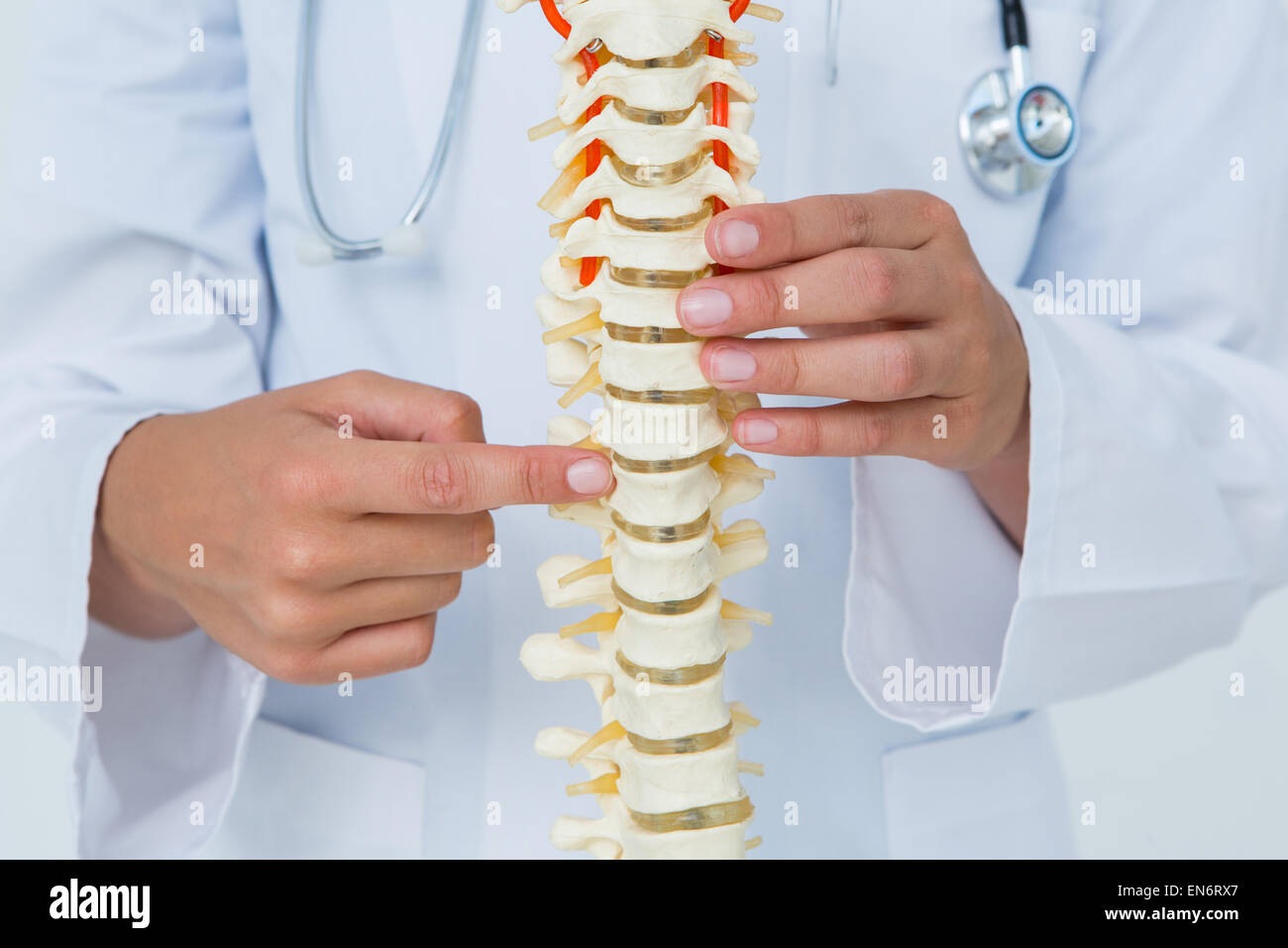 Doctor pointing an anatomical spine - Stock Image