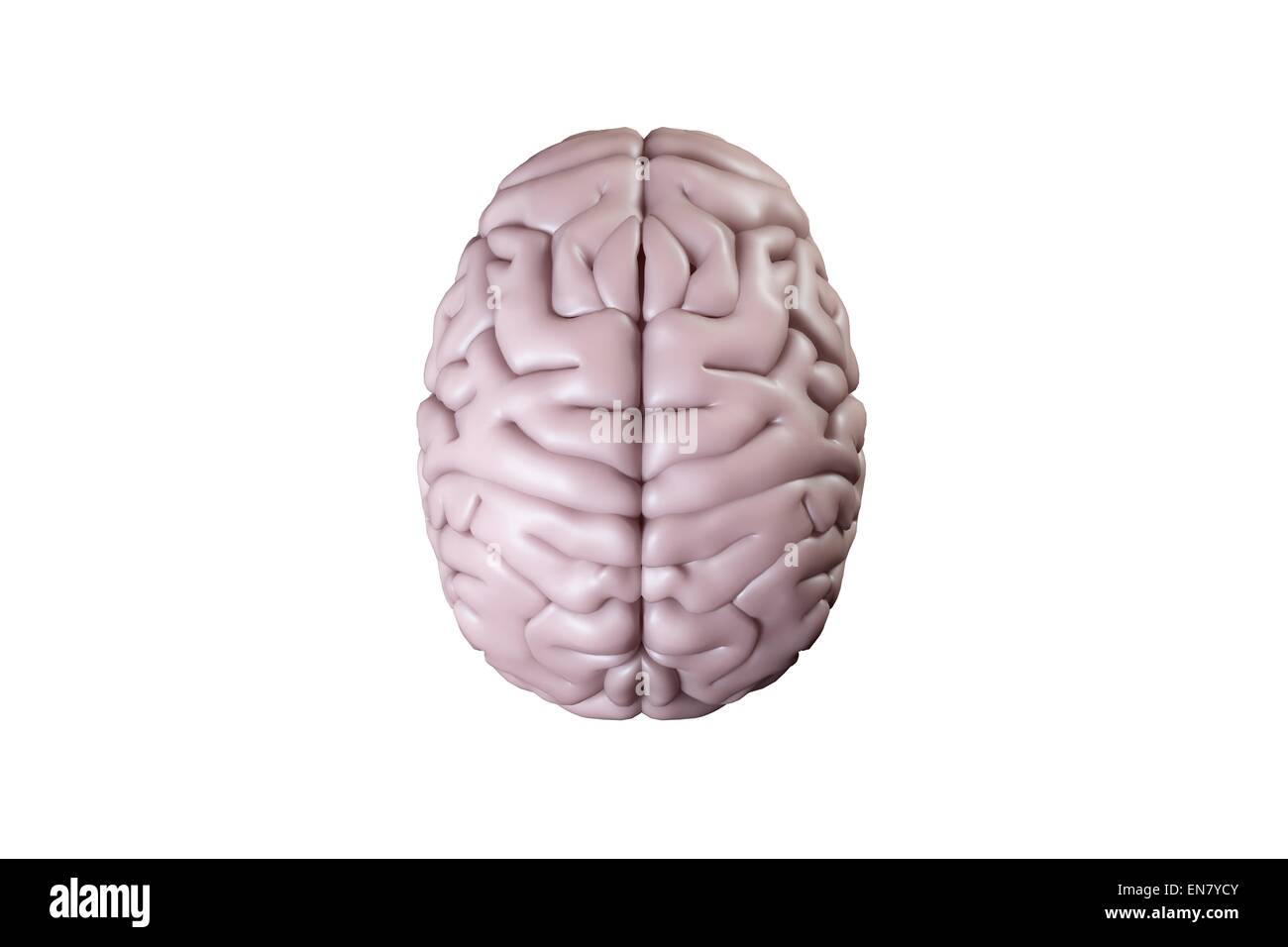 Digitally generated brain - Stock Image