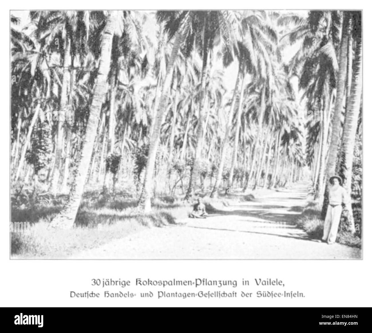 WOHLTMANN(1904) p102 - 30-jC3A4hrige Kokospalmen-Pflanzung in Vailele, Deutsche Handels- und Plantagengesellschaft - Stock Image