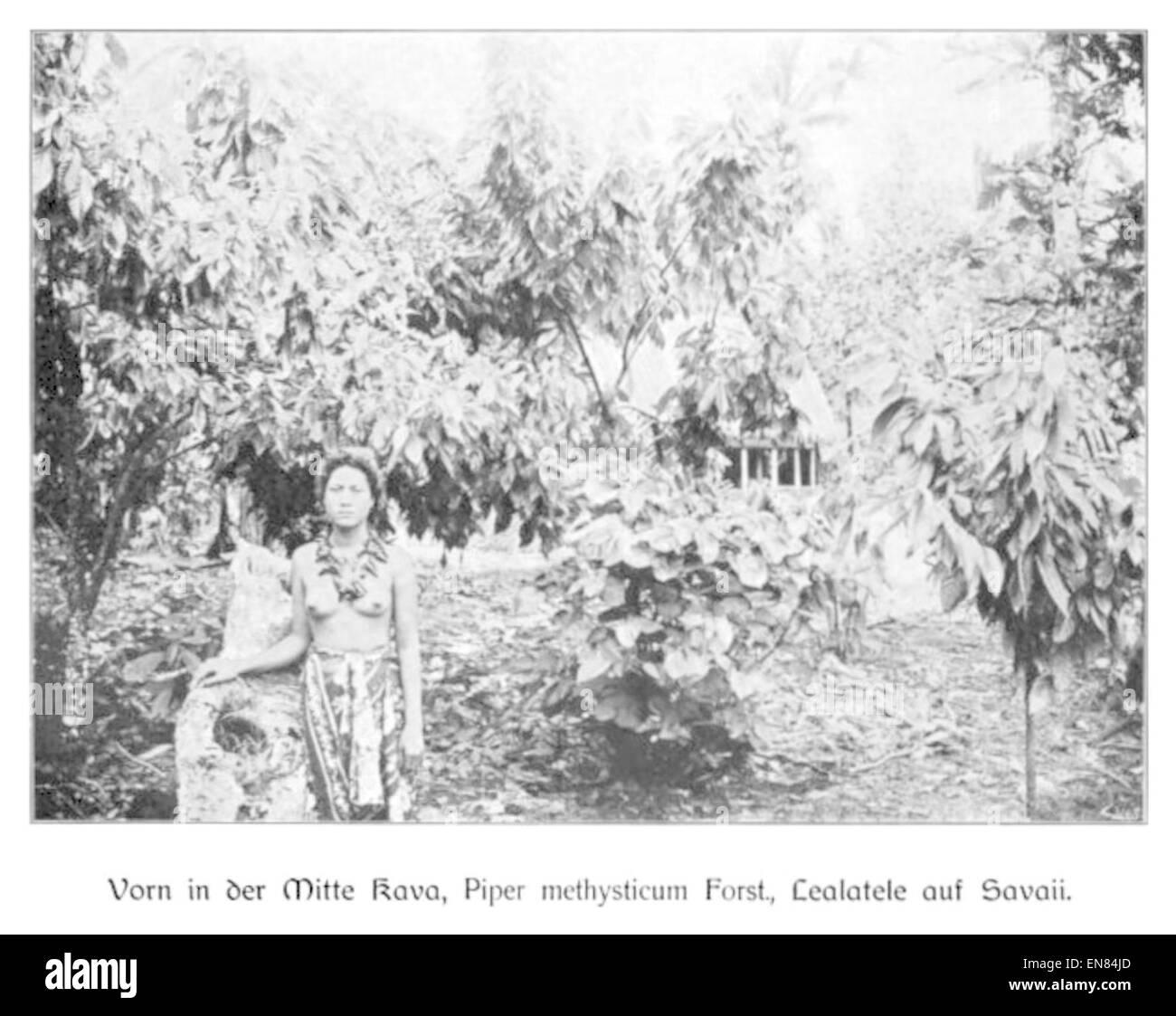 WOHLTMANN(1904) p117 Versuchsanbau auf der Insel Savaii - Stock Image
