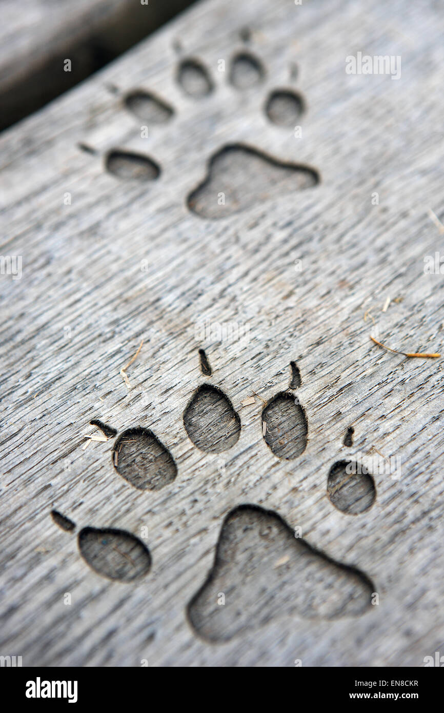 Otter paw prints carved into a wooden seat at Lang Craigs in Dumbarton Scotland - Stock Image
