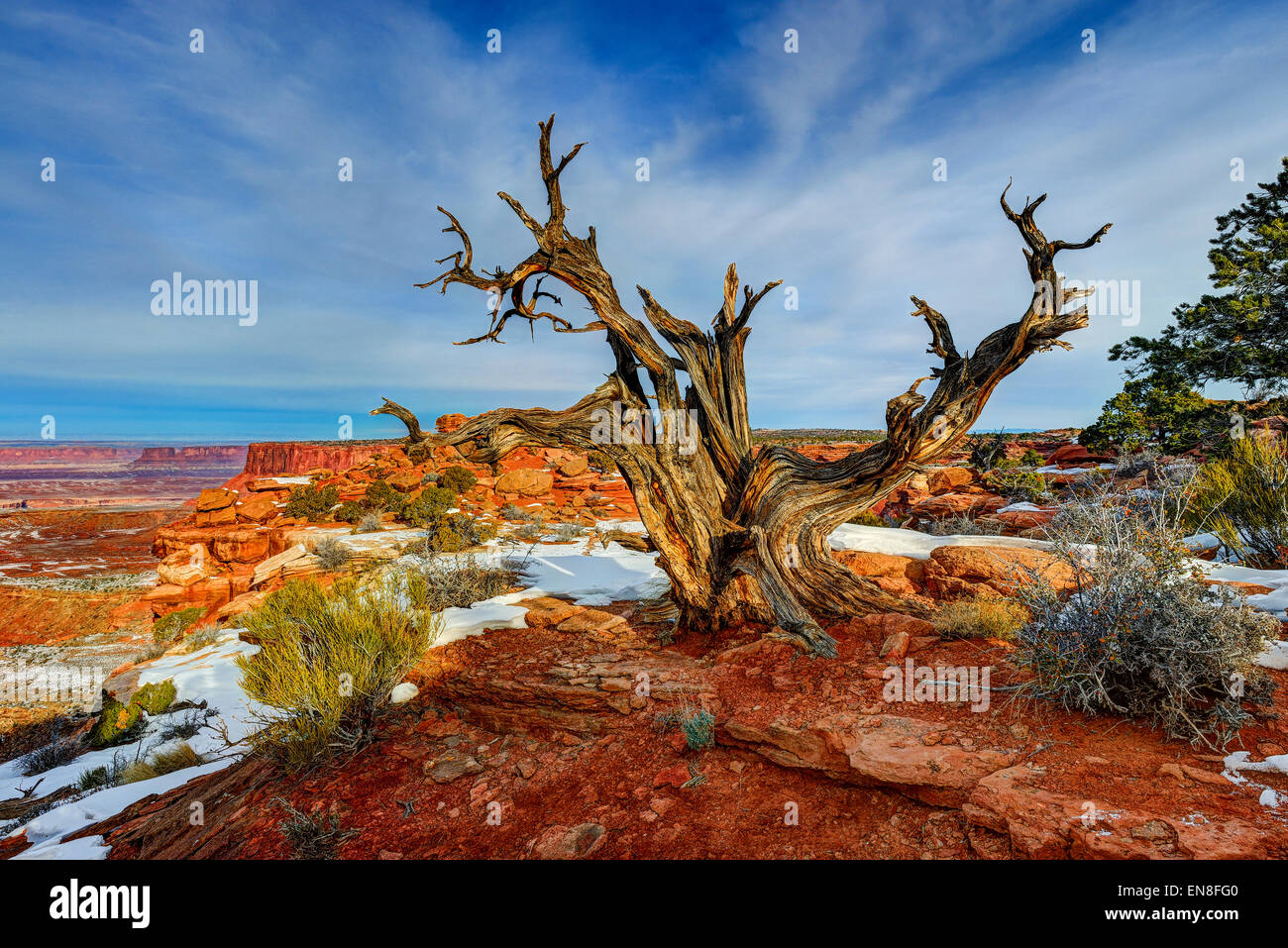 'old friend', island in the sky, ut - Stock Image