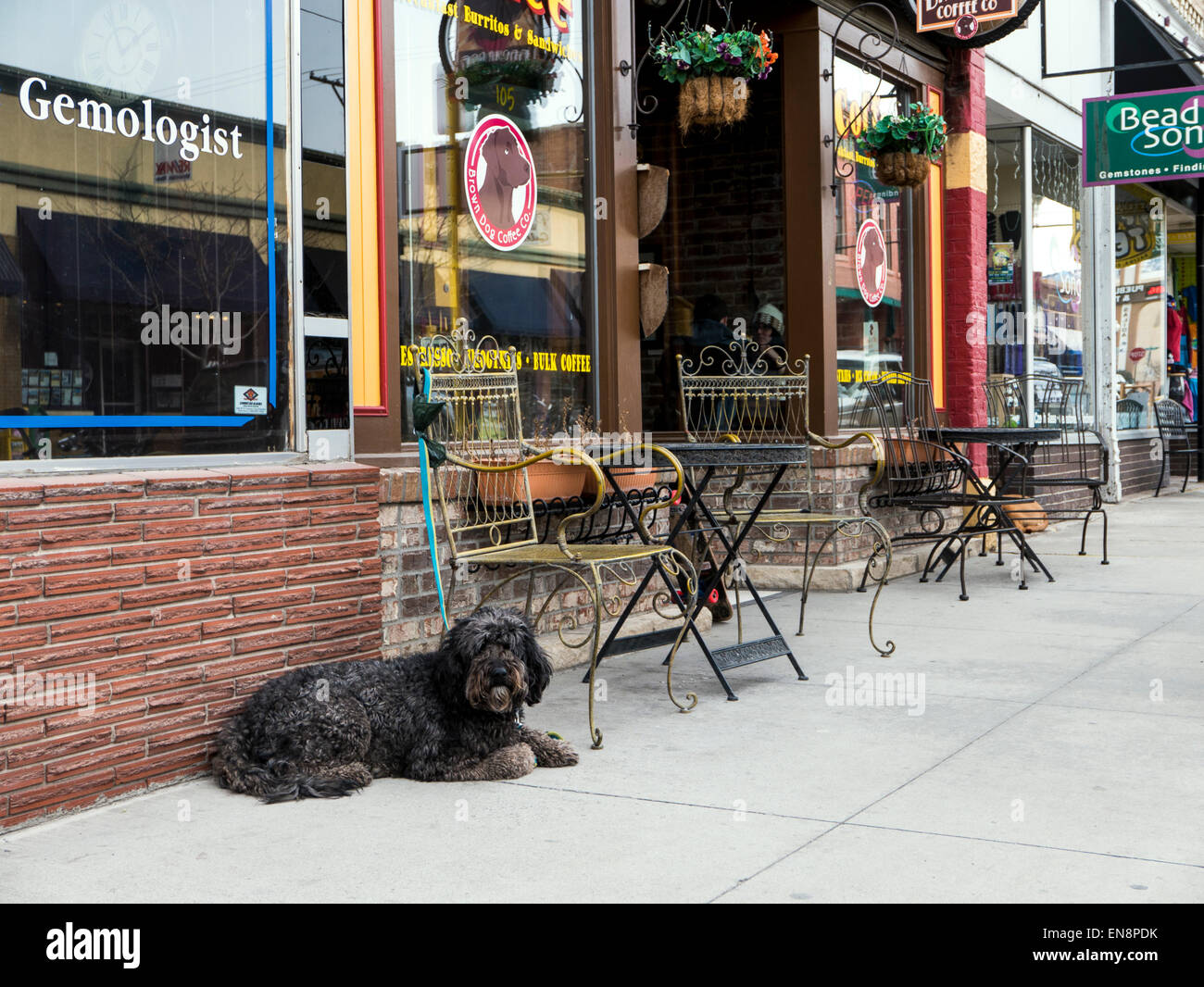 Dog waiting for owner outside coffee shop, downtown historic Salida, Colorado, USA - Stock Image
