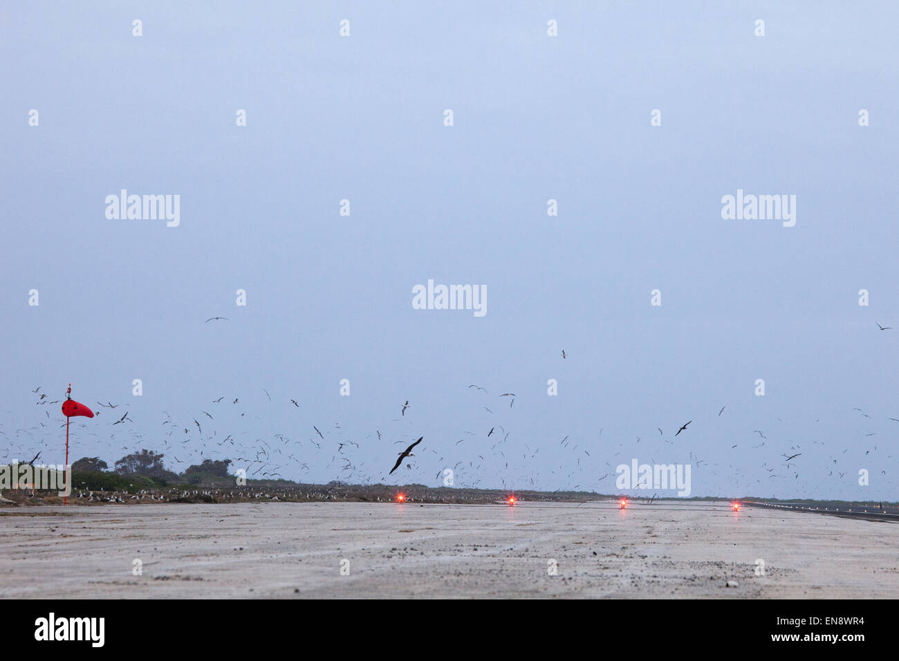 Seabirds flying over an airport runway, Henderson Field - Stock Image