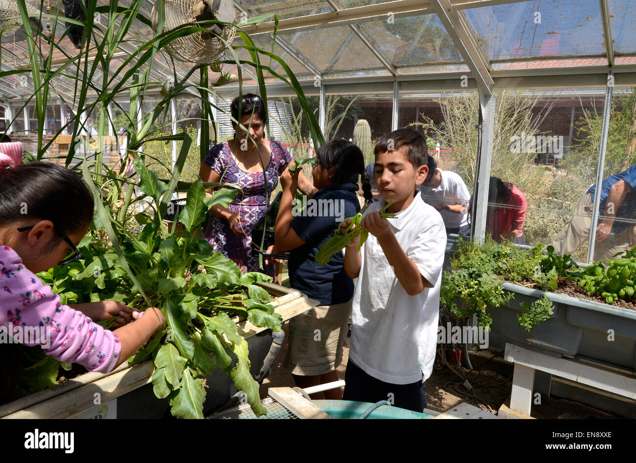 Tucson, Arizona, USA. 29 April, 2015: Jasmine Mendez, 10, (left), University of Arizona intern, Rebecca Renteria, - Stock Image