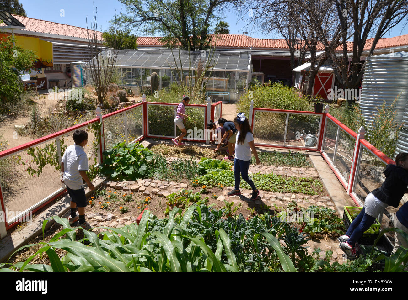 Marvelous 29 April, 2015: Students Work In The School Garden At Manzo Elementary  School, Tucson, Arizona, USA. The School Was The First In TUSD To Be  Certified For ...