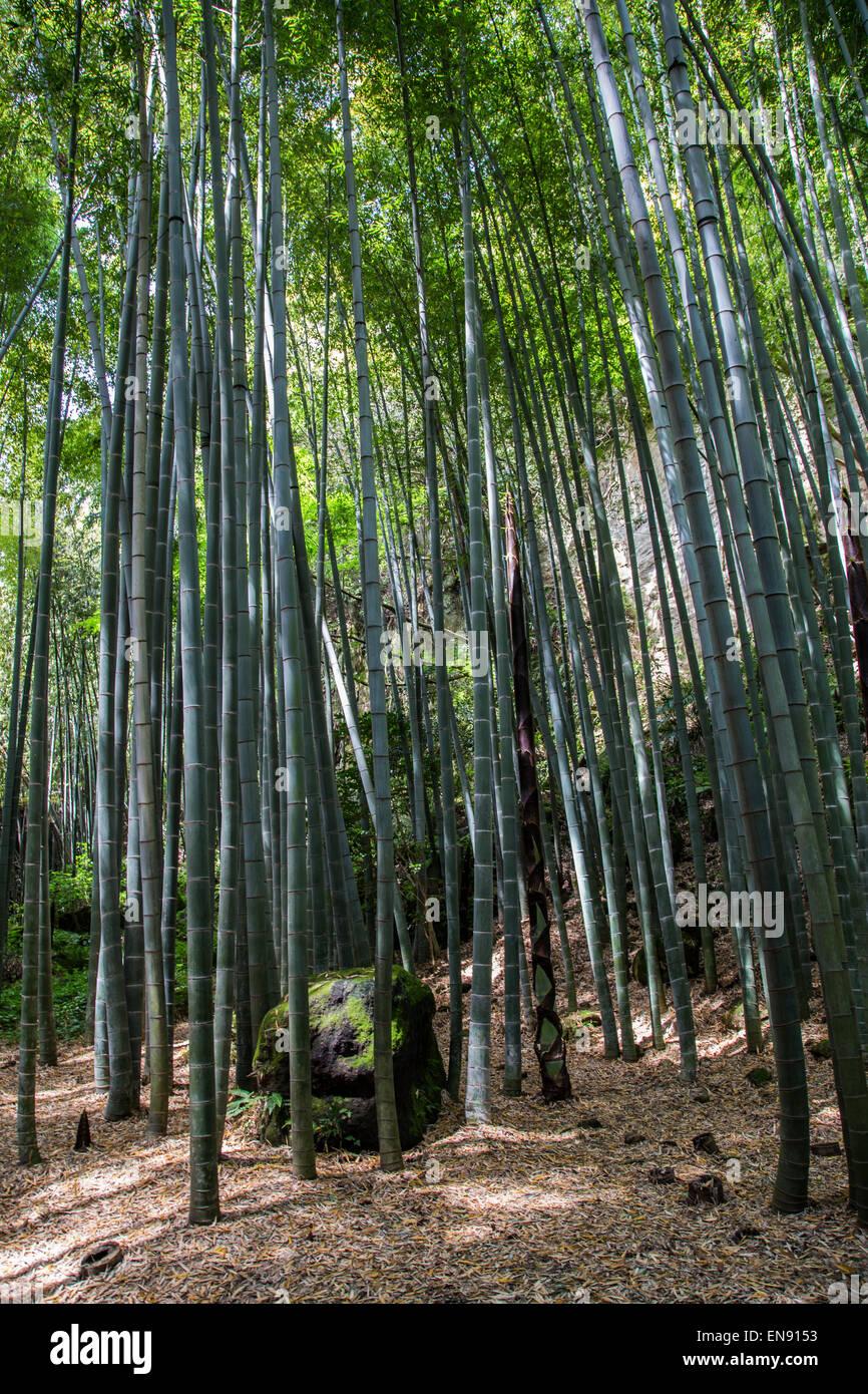 bamboo garden stock  bamboo garden stock images