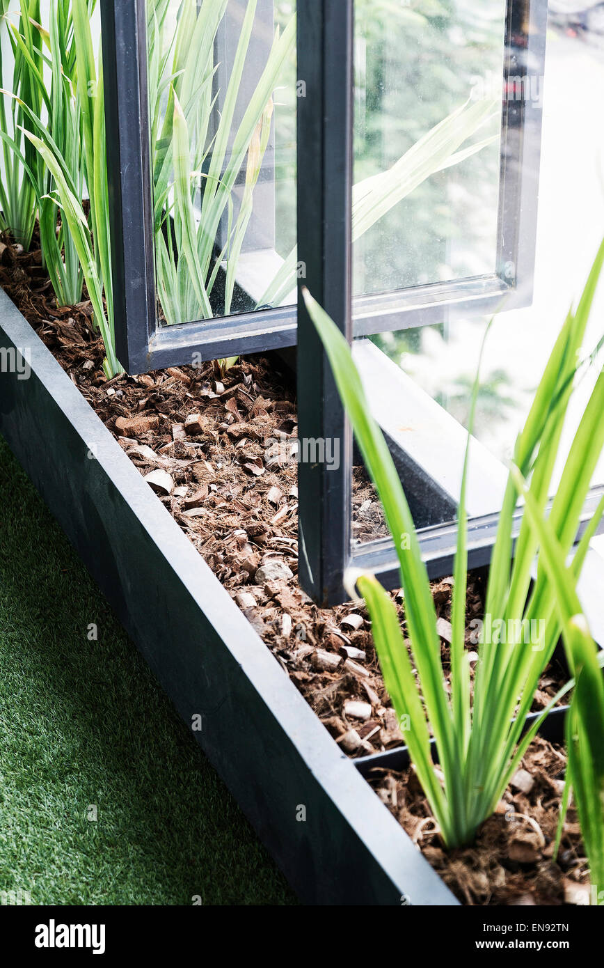 modern architecture minimal style trendy window and plants detail - Stock Image