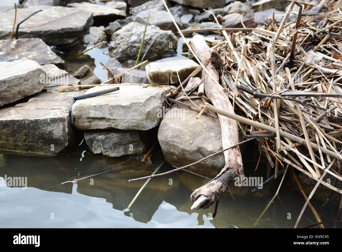 Winter Vegetation Washes Up on Lakeshore - Stock Image