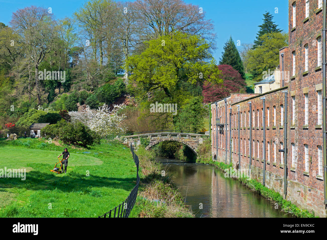 Man mowing grass at Quarry Bank Mill, a National Trust property, Styal, Cheshire, England UK - Stock Image