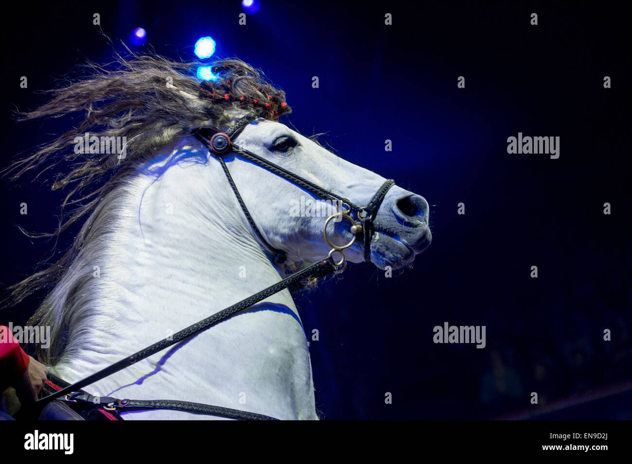 Horse in gallop - Stock Image