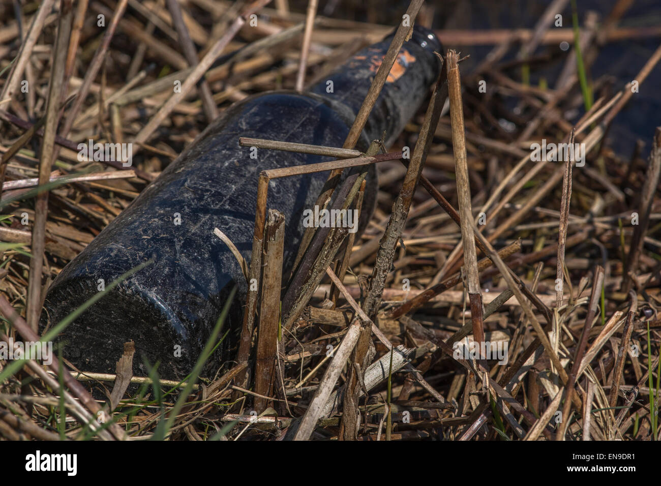Discarded glass bottle littering the banks of the River Fowey in Cornwall. - Stock Image