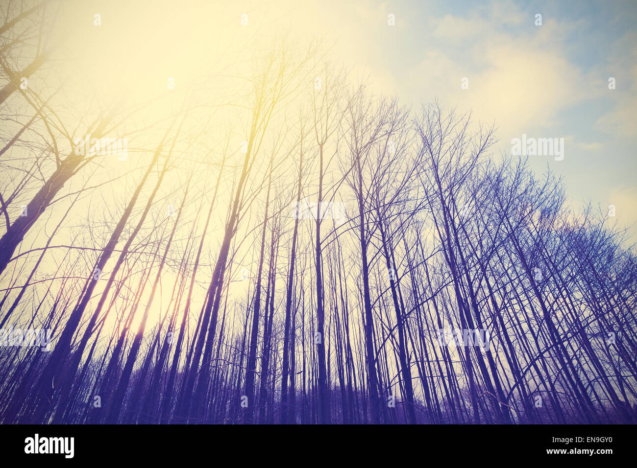 Vintage toned peaceful forest with vignette effect. - Stock Image