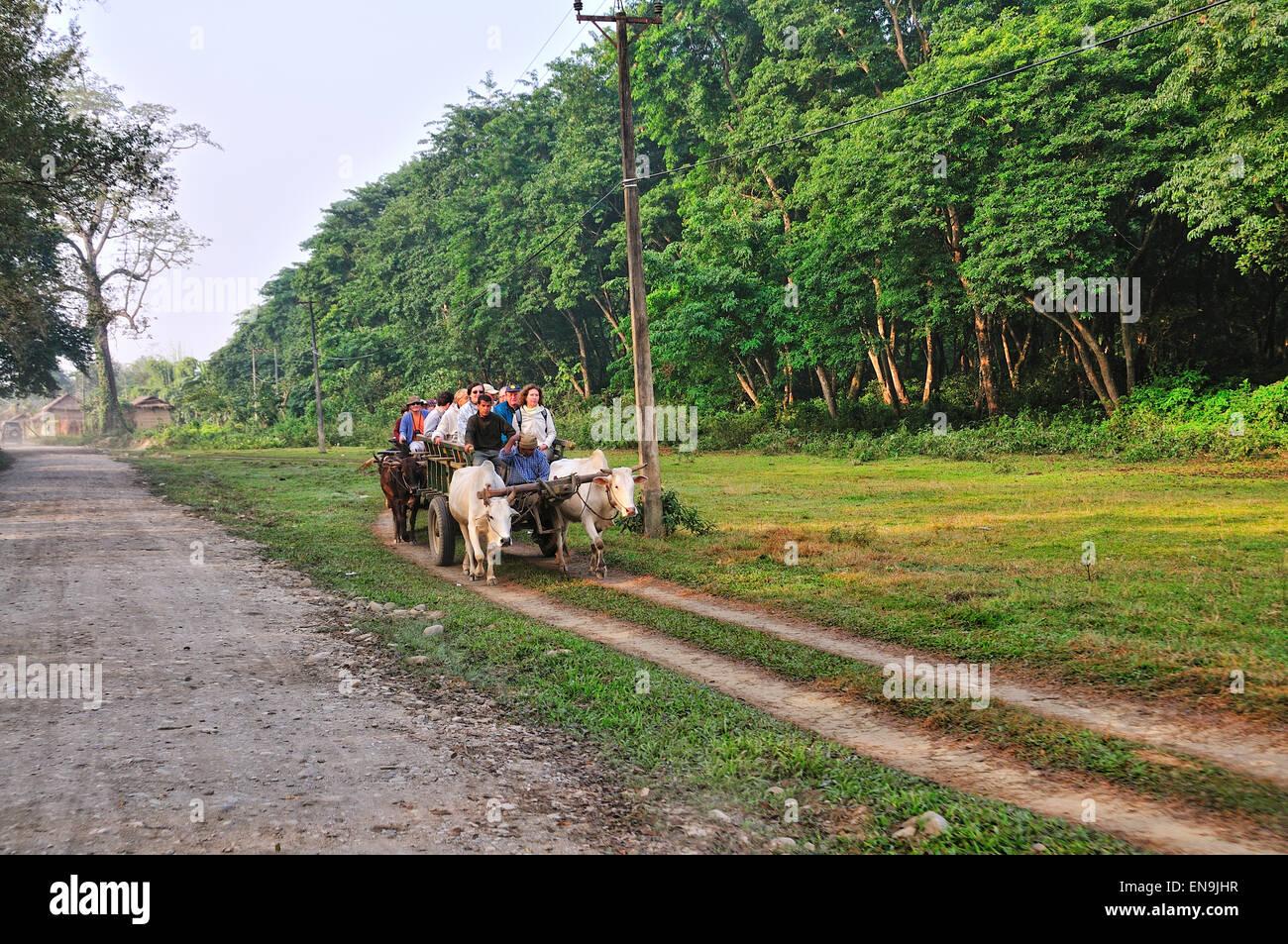 Chitwan National park, Chitwan, Nepal. - Stock Image